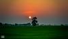 ACR-4187 (Aaseer Ahamed) Tags: nikond7100 nikon nikonian landscapelove landscape leisure sunset passion multicolour acrphotography