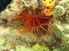 IMG_7544 (adrienweckel) Tags: adrienweckel apnée ctenoidesscabra limerèche mollusques