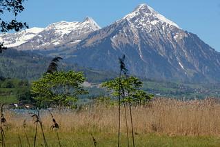 Niesen ( BE - 2'362m - Seit 1910 erschlossen mit S.tandseilbahn - Berg montagne montagna mountain ) in der Niesenkette in Voralpen ( Alpen Alps ) im Berner Oberland im Kanton Bern der Schweiz