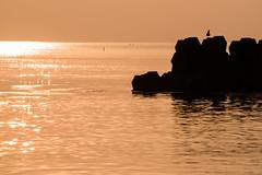 神子40・Miko (anglo10) Tags: 三方上中郡 福井県 japan 北陸 若狭 常神半島 神子 夕景 sunset 海 seashore