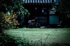 寺庭/temple (Smoking room) Tags: x−t1 xf60mmf24 寺 自転車 黄色
