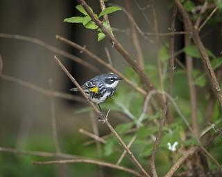 Backyard Bird Surprise...