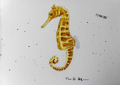 May daily challenge 13 - From the Sea (chando*) Tags: aquarelle watercolor croquis sketch seahorse hippocampe