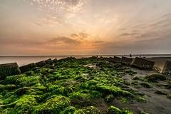 黃金海岸綠藻 (hosihane) Tags: 台灣 台南市南區 綠藻 日落 天際線 堤防 霞光 鵝卵石 綠 sony a77 黃金海岸