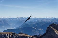 Flight over the Säntis (Claude-Olivier Marti) Tags: switzerland swissmountains swiss swissalps montagne mountains alpes alpessuisses alpin