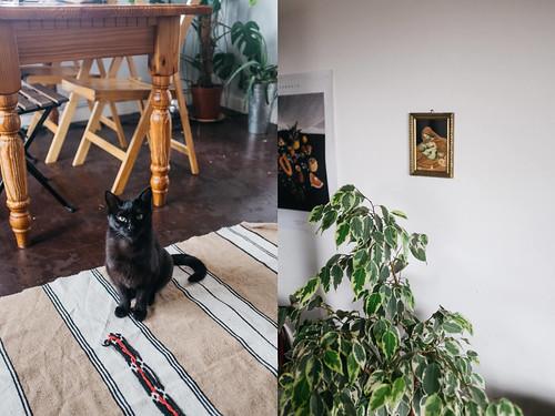 Cat sitting / Painting