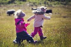 IMG_6596_redver2 (Eivind Nielsen) Tags: sheep sauer lamb lam daughter girls