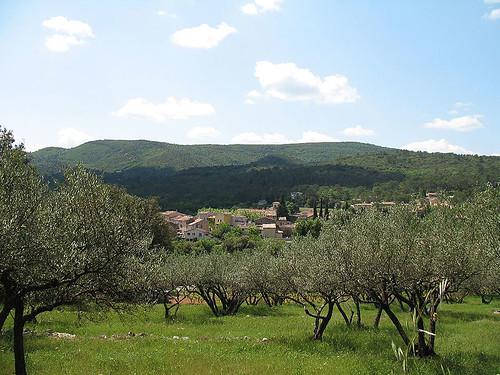 Champ d'oliviers et village