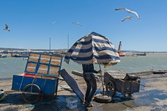 Fisherman´s daily Work (jennifer.stahn) Tags: travel travelphotography maroc marocco marokko morocco afrika africa nordafrika essaouira fisherman fisher fischer work dailylife blue bluesky nikon jennifer stahn seascape seagulls