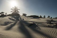 Brazil - Mangue Seco (Nailton Barbosa) Tags: brasil brazil brasile brésil bahia jandaira mangue seco nordeste praia dunas coqueiros nikon d800