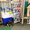 TESCO Cat (SlipStreamJC) Tags: tesco cat pinner