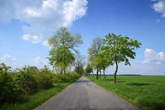 spring as it is (JoannaRB2009) Tags: spring path road avenue alley green blue sky fields tree trees clouds łódzkie lodzkie polska poland puczniew landscape view