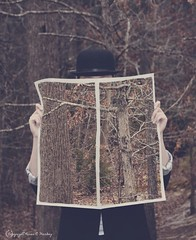 what Wood you read? (Little Hand Images) Tags: bowlerhat trees woods paper newspaper surrealism magrittetribute