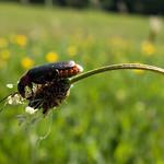 2017 Natur - Nähe Platte-5.jpg thumbnail