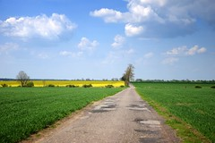 spring as it is (JoannaRB2009) Tags: spring blue green yellow path road countryside sky clouds field fields nature landscape view canola puczniew łódzkie lodzkie polska poland tree alley avenue trees