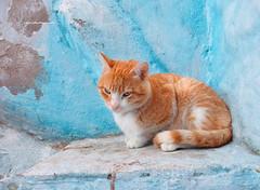 DP1M0066 (lixun) Tags: chefchaouen 舍夫沙万 morroco 摩洛哥 cat dp1m