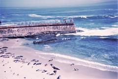 La Jolla seals (tylerfernandez) Tags: konstructor 35mm exposure ocean la jolla film kodak seals seal beach california san diego diy travel traveling waves blue pier nature 400iso 400 iso400 amateur american camera 50mm plastic lense