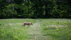 3333 (cleotalk) Tags: jessamine county ky kentucky gorge trail creek overstreet deer woods hiking