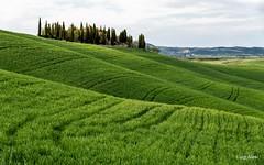 Toscana - Val d'Orcia (Luigi Alesi) Tags: toscana italia italy tuscany siena val dorcia san quirico paesaggio landscape scenery verde green onde campagna country countryside natura nature campi fields nikon d750 raw