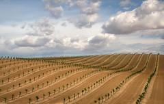 Farmland (jojo (imagesofdream)) Tags: farming bakersfield california kern county