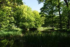 green (helena.e) Tags: helenae nolhaga green grön träd tree water explore alingsås köllera park