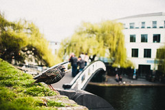Bird: piup!; Me: Hi! How's the river?; Bird: The river? A sh*t! 3 (xavi_julia) Tags: london streetphotography olympus canon 24mm f28 grain vintage