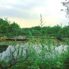 只能遠望水下迷宮,因為入口的棧道被多日的雨給淹了⋯⋯🌳🌲  #xixinationalwetlandpark #greentrees #greenview #naturephotography #nature #water #travel #trip #lookaround #beautifulplace #underwater #instanature #instawater #instagreen #instatravel #instatri (dalegelady) Tags: instagramapp square squareformat iphoneography uploaded:by=instagram skyline