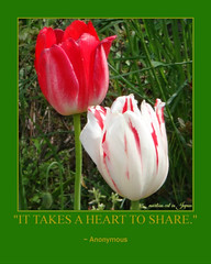 """It takes a heart to share."" (martian cat) Tags: fdsflickrtoys tulip yokohama japan ©martiancatinjapan allrightsreserved© ©allrightsreserved flower nature martiancatinjapan© ☺allrightsreserved allrightsreserved ☺martiancatinjapan martiancat martiancat© ©martiancat martiancatinjapan motivationalposter motivational captioncollection caption flickrtoysfotofun bighugelabs flickrtoys creativity"