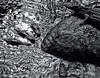 Crocodile (Olivier Roche) Tags: crocodile croco animaux animals gator aligator bw noiretblanc water eau ondes gf1 crocodylus