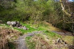 A Way Down (Brian Travelling) Tags: dalcairnie dalcaernie dalcarnie dalcarney falls ayrshire east south southayrshire eastayrshire gorge woods forest gallowayforestpark bridge wooden waterfalls waterfall scotland scenery scenic
