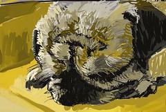 Grrrr! (Ujwala Prabhu) Tags: dog pug artrage digital 2017 ujwala