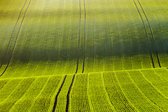 Green Frequency (S l a w e k) Tags: southdowns nationalpark field abstract rollinghills green spring landscape farming agriculture sussex england britain uk travel brighton