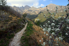 Sentiero verso il Resegone (supersky77) Tags: resegone lecco erve sentiero path cotoneaster integerrimus prealpi alps alpi alpes alpen lombardia lombardy lombardei lombardie