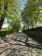 Tree Shadows (Ian Robin Jackson) Tags: aberdeen chanonry street wall shadows trees light sony cobbles green blue view avenue scotland tree 2017 pavement hedge leaves branches