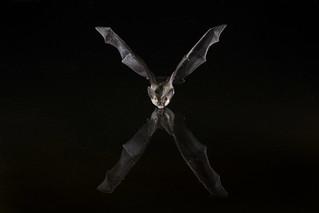 X marks the bat