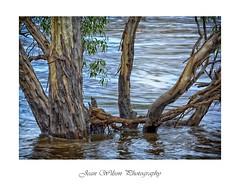 Six foot under (Tartan Ranga) Tags: river flood australian bush