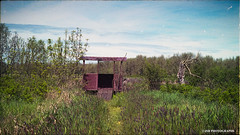 Fern ridge wildlife refuge - film (JSB PHOTOGRAPHS) Tags: apsfilm dotdotsons epsonv500 ishootfilm minolta minoltavectiss1 v500 vectiss1 colorfilm expiredfilm film filmcamera filmisnotdead filmphotography minoltavectiss1439 fernridgelake wildliferefuge photographyhide landscape