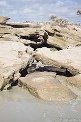 coquina rock (liangjinjian) Tags: florida marineland palmcoast usa coquinarock geo:lat=2963923500 geo:lon=8119974639 geotagged 美国