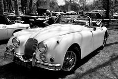 Jaguar XK 120 (petit_filou77) Tags: jaguar xk xk120 120 v6 v8 collection england luxury oldies cabriolet white black