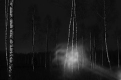 echoes III (Mindaugas Buivydas) Tags: lietuva lithuania bw forest tree trees birch dark darkness mood moody spring march whiteinblack mindaugasbuivydas echoes