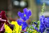_DSF5138 (ad_n61) Tags: mayofujifilm xt1 fujinon super ebc xf 18135mm 13556 ois wr zaragoza flores amarillo naranja lolita morado violeta verde azul tierra primavera españa