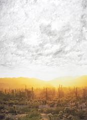 Sunset 1, 19x14