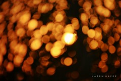 Into The Sun .. (Hazem Hafez) Tags: tree leaves stem sun wind bokeh movement farm garden sunset