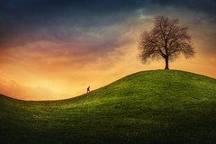 up the hill (Chrisnaton) Tags: treeonthehill grasshill hiking nature surreal surreallandscape eveningmood eveningcolors greenwave upthehill