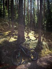 Day Biking 4 (pjen) Tags: santacruz mtb finland nature forest spring carbon fullsuspension nordic boreal maastopyörä pike 275 650b kashima trail bicycle bike 2x11 outdoor vehicle 5010 5010cc maastopyöräily