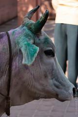 Rajasthan-213.jpg (Black Stratocaster Laurent) Tags: agra fortrouge inde rajasthan