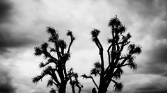Reawakening (Picowatt) Tags: canon eos 70d 1755mm ciel cloud noiretblanc blackandwhite bw arbre tree nuages longexposure expositionlongue