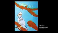 hoover-spring-bluejay-charlie