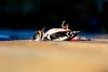The Dead Woodpecker - DSCF3674 (s0ulsurfing) Tags: s0ulsurfing 2017 april isle wight bird colourimage dead death decking domesticgarden greatspottedwoodpecker horizontal isleofwight nopeople outdoors photography totlandbay uk woodpecker