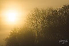 Morgenstimmung (b.stanni) Tags: wolken nebel fog germany deutschland outdoor idylle light licht himmel landschaft landscape lake mv müritz natur nature sun sonne sonnenaufgang sunrise